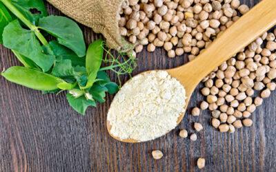 Plant Based Food Organizations