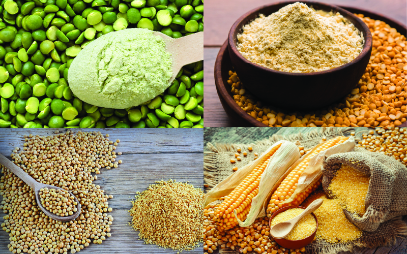 Plant Protein Articles & Research