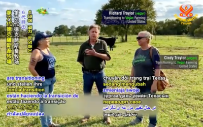Longtime cattle ranchers from Texas, United States, switch to vegan diet and crop farming