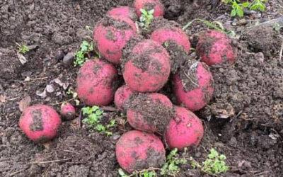 Veganic Farming Articles