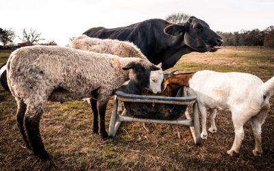 Transitioning Farmers & Ranchers