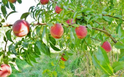 Organic Farming Articles